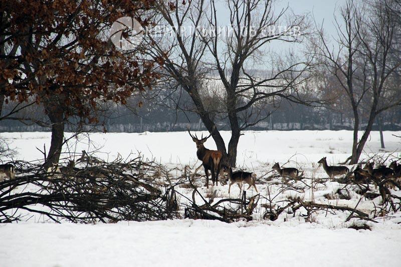 Берегівське лісове господарство – місце, куди хочеться повертатися знову і знову