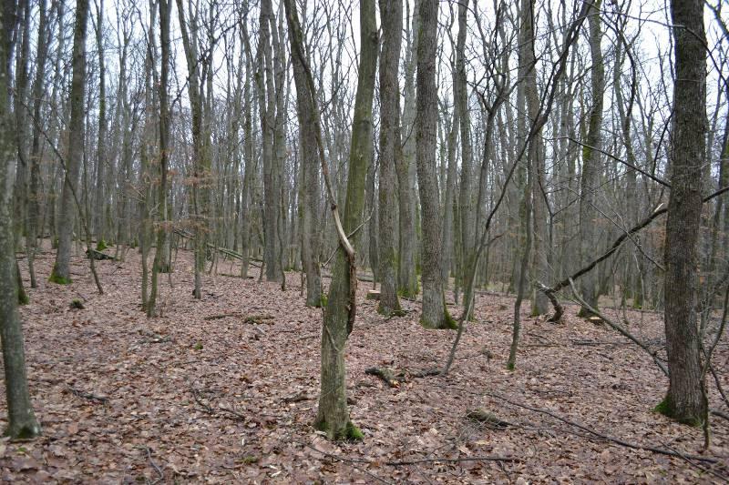 Планова вирубка чи нищення лісу?! ФОТО